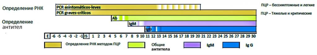схема определение рнк
