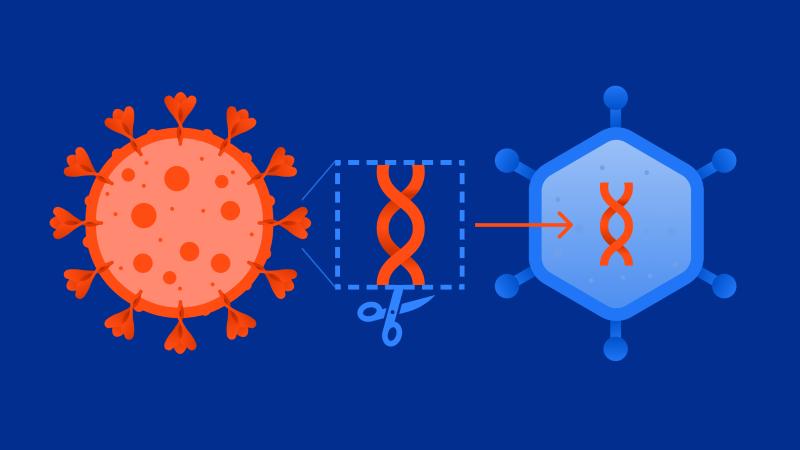 действие вакцины от коронавируса