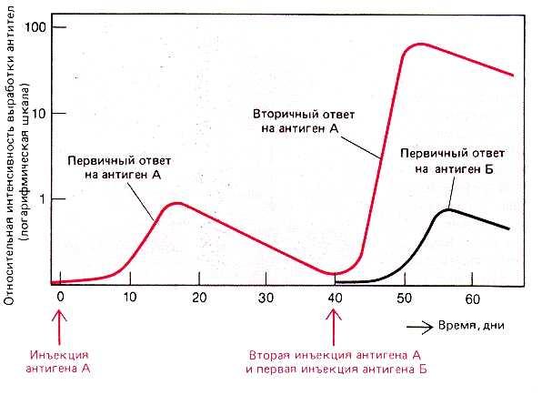 формирование титра антител
